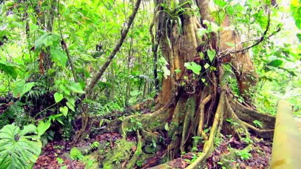 Aussperrung des immergrünen Regenwaldes.