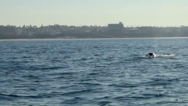Gyönyörű kilátás nyílik a bálna, fúj ez a lyuk előtt vissza búvárkodás a víz és a madár repül