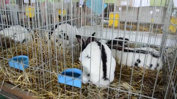 Kaninchen in einem Käfig