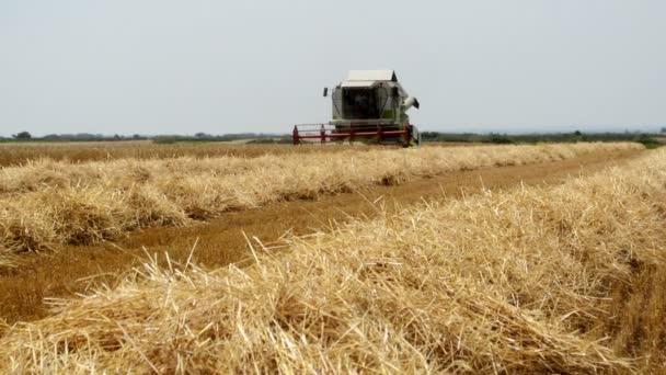 Kombinovat sklizeň pšenice, zemědělský koncept