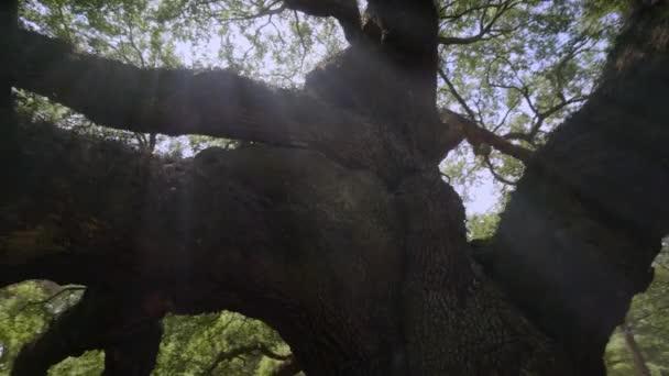Southern Live Oak  or Angel Oak Tree , Johns Island, Charleston, South Carolina, USA, Sep 2016