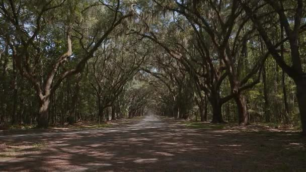 Live oak trees dripping with Spanish moss, the rural road leading to the Wormsloe Historic Site near Savannah, Chatham, Savannah, Georgia, USA, SEP 2016