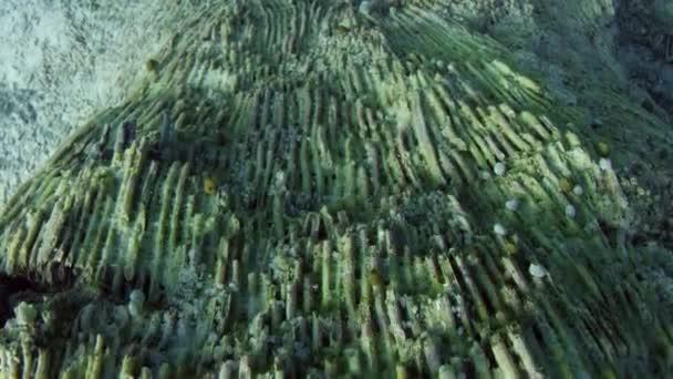 Kamerafahrt über eine teilweise zerstörten Korallenriff, verursacht durch die Korallenbleiche. Globale Erwärmung, Klimawandel, Indonesien