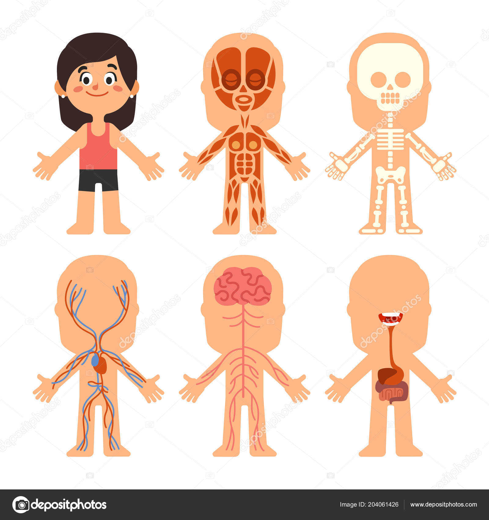 cartoon girl body anatomy woman veins organs and nervous system