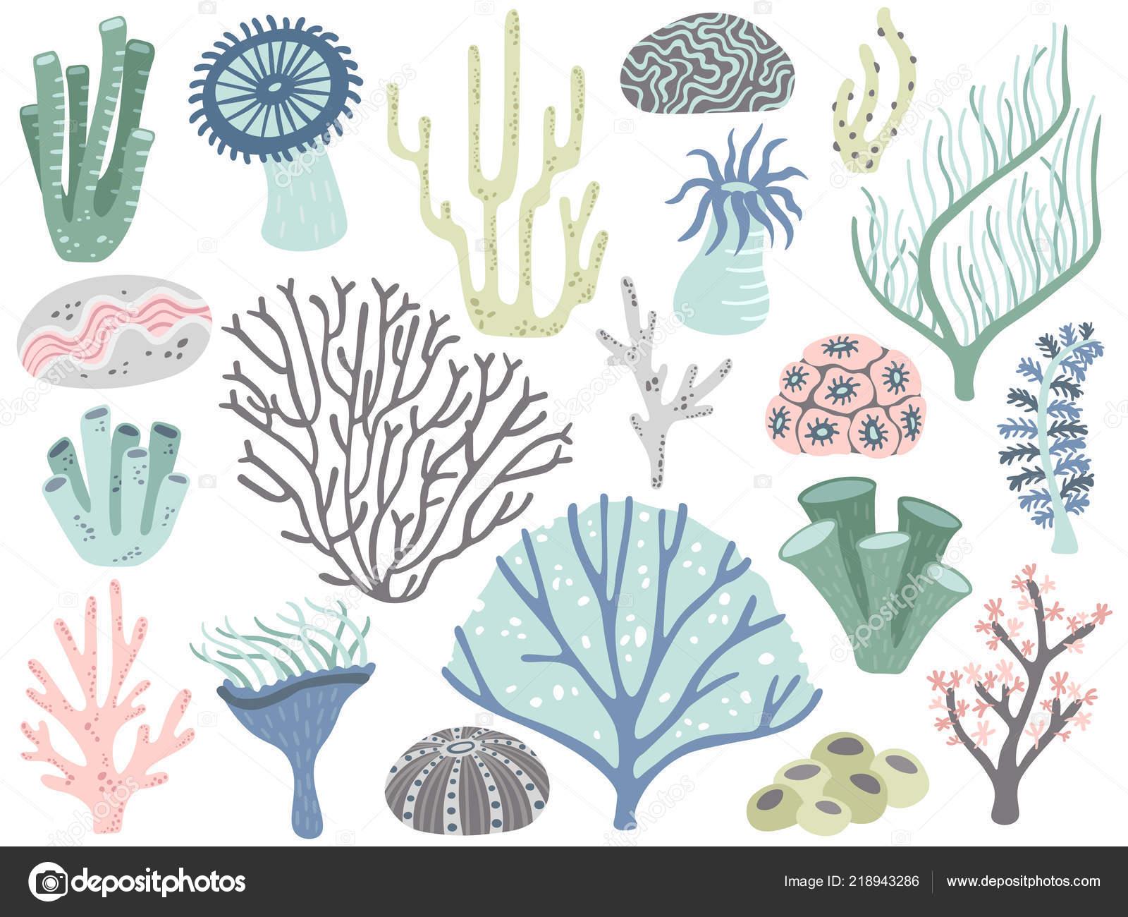 Acquario Di Coralli E Alghe Marina Militare Oceano Corallo Flora