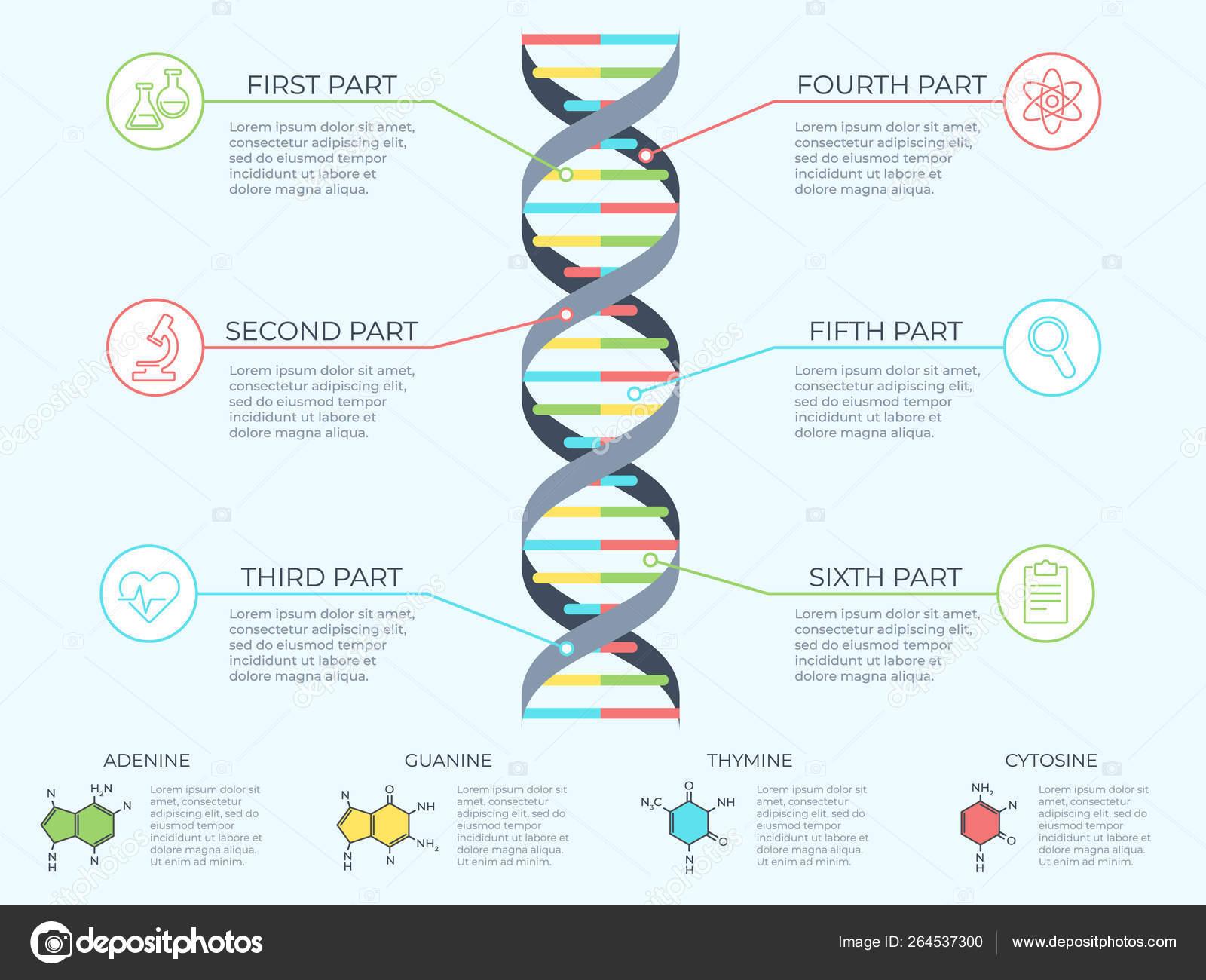dna infographic  genetic spiral, genomic model molecule diagram and adn  pattern structure chart  medicine molecular rna, chromosome infographics or dna  gene