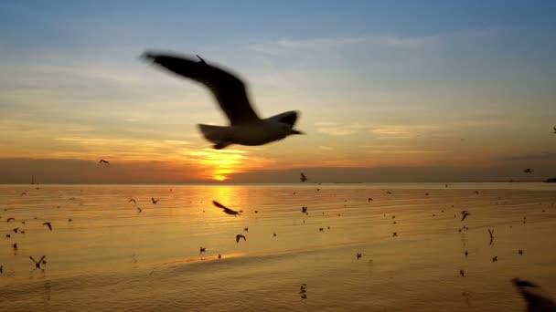 Pomalý pohyb, racky létají do moře večer před západem slunce.