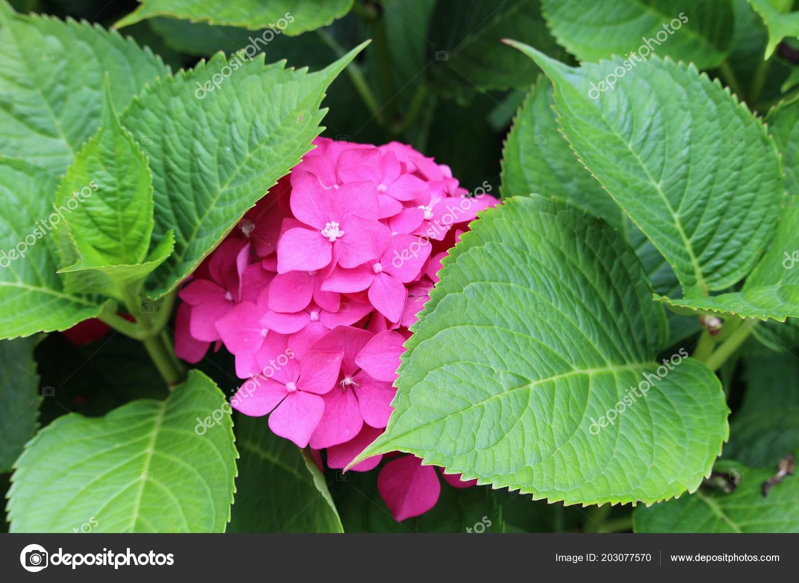 Strange Rare Tropical Flower Very Beautiful Big Stock Photo