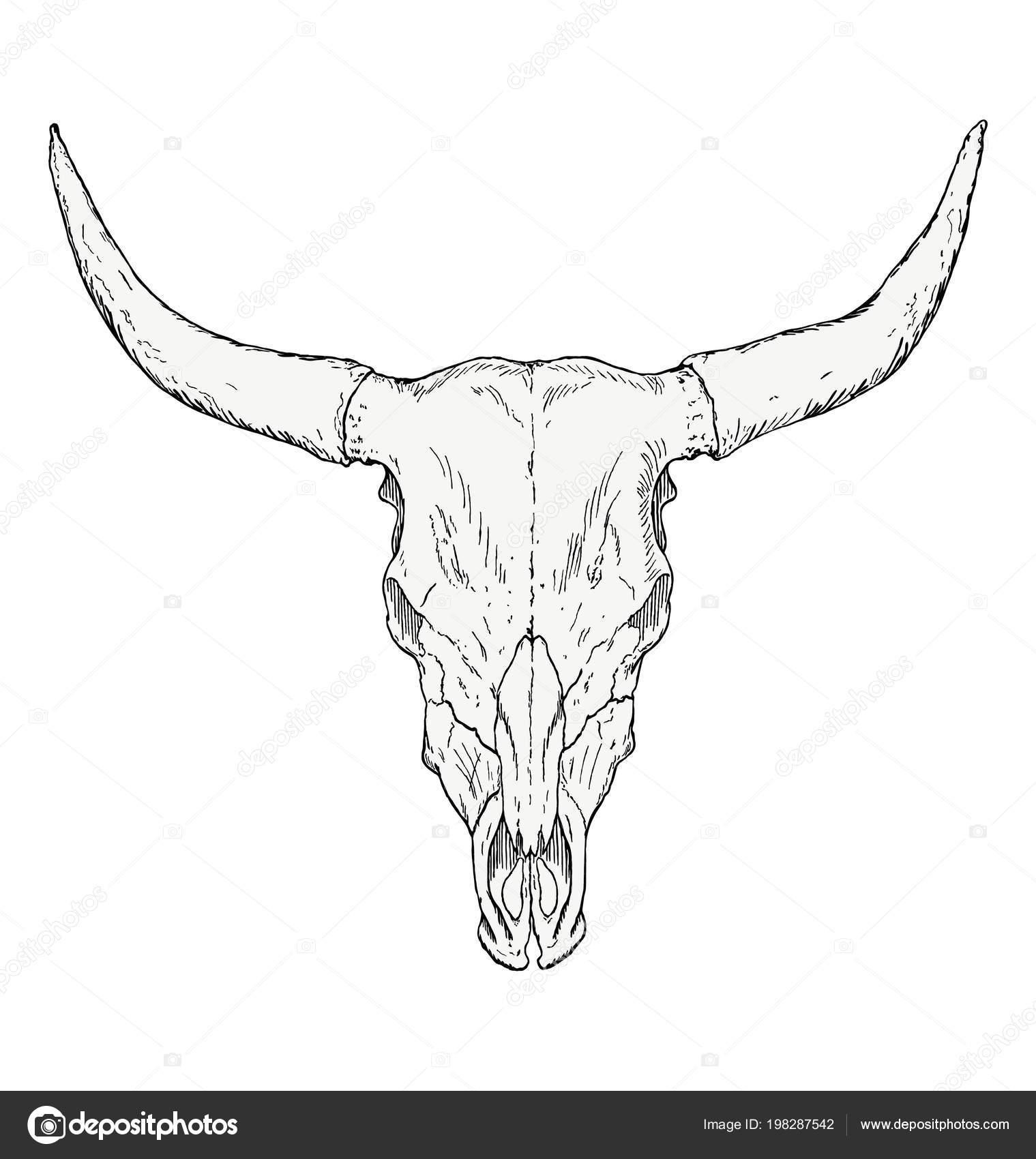 Crâne Taureau Dessin Main Image Vectorielle Blacklava36 198287542