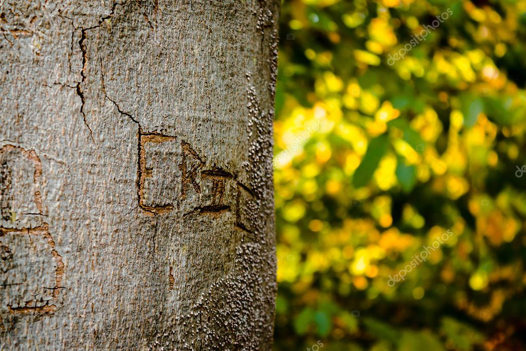 Name carved into a tree in the woods