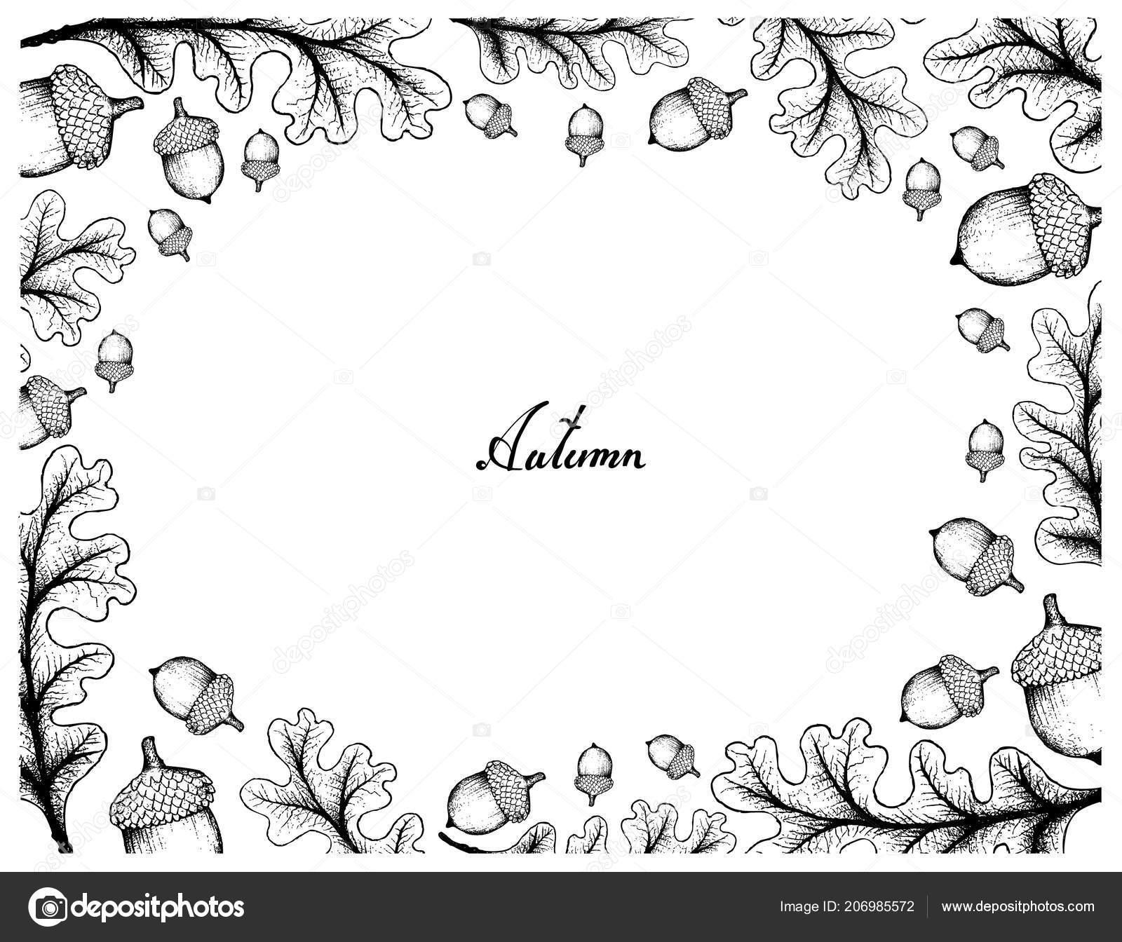 Autumn Tree Illustration Hand Drawn Frame Oak Leaves Fruits Symbolic ...