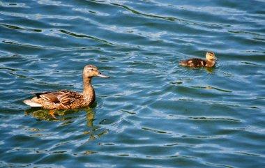 Different birds Altaya