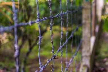 Iron barbed wire close up