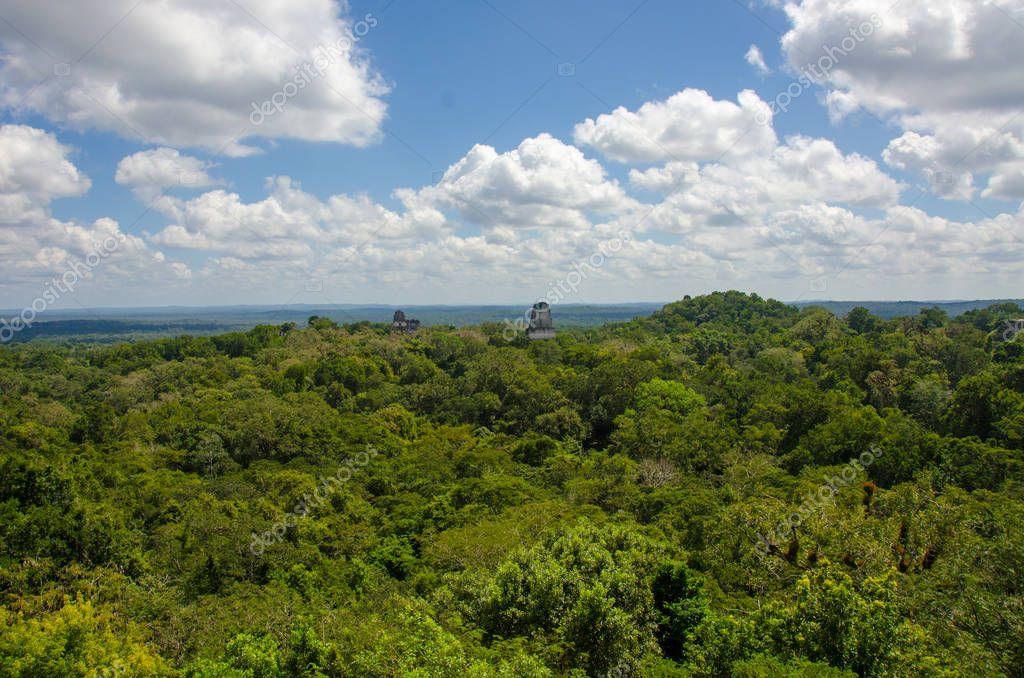 green tropical rainforest of Guatemala