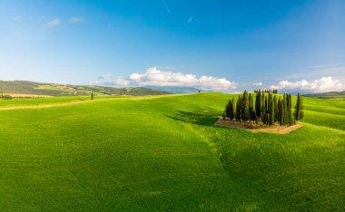 Group of italian cypresses near San Quirico dOrcia - called Cipressi di San Quirico dOrcia - aerial view - Val dOrcia, Tuscany, Italy stock vector