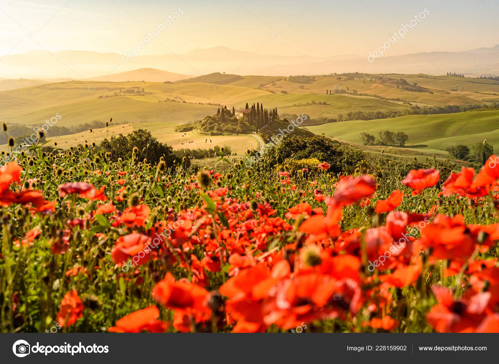 Poppy Flower Field Beautiful Landscape Scenery Tuscany Italy