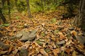 Podzimní listí detailní pohled - přírodní pozadí. Mělká Hloubka pole