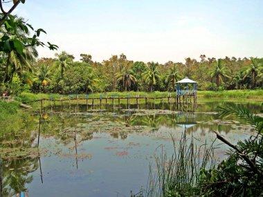 """Картина, постер, плакат, фотообои """"сундарбаны - это огромный лес в прибрежном регионе бенгальского залива, который считается одним из природных чудес света. постеры печать санкт-петербурга"""", артикул 200916780"""