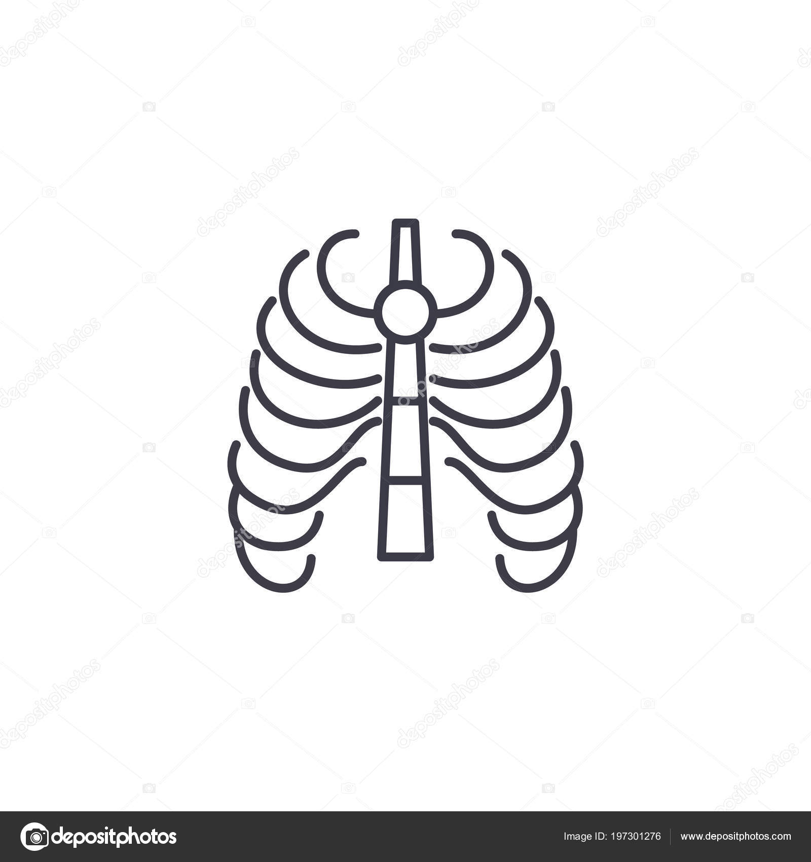 Thoracic Cage Linear Icon Concept Thoracic Cage Line Vector Sign