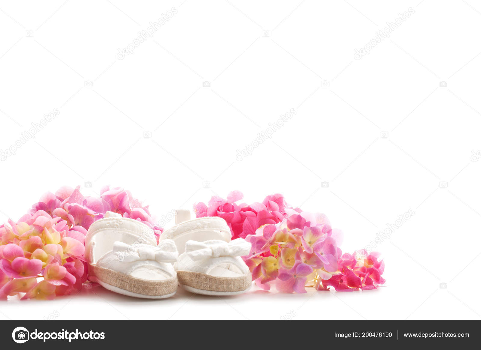 Cute newborn baby girl shoes hortensia flowers white background baby stock photo
