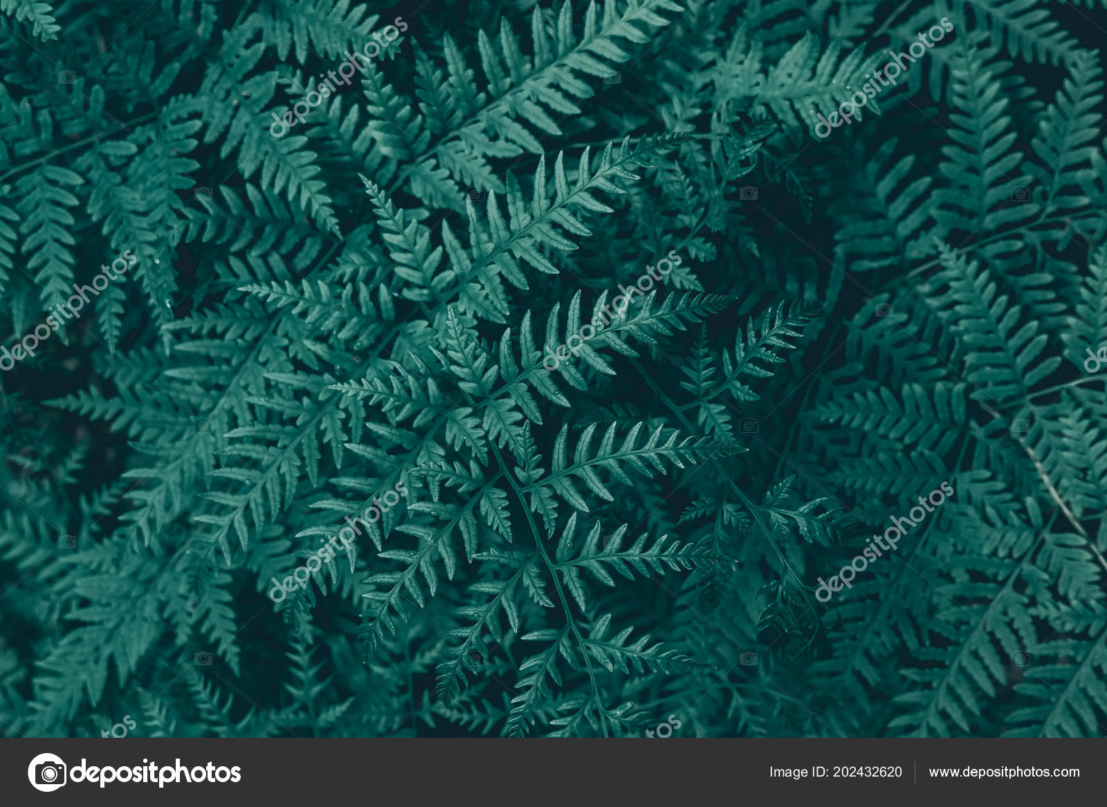 Dark Green Texture Background Stock Photo C Le View 202432620