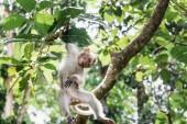 Photo monkey in monkey forest of Ubud, Bali, Indonesia