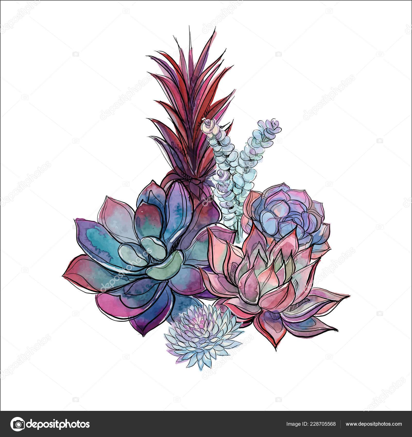 Bouquet Succulents Flower Arrangement Design Watercolor Graphics Vector Vector Image By C Grigaolga Vector Stock 228705568