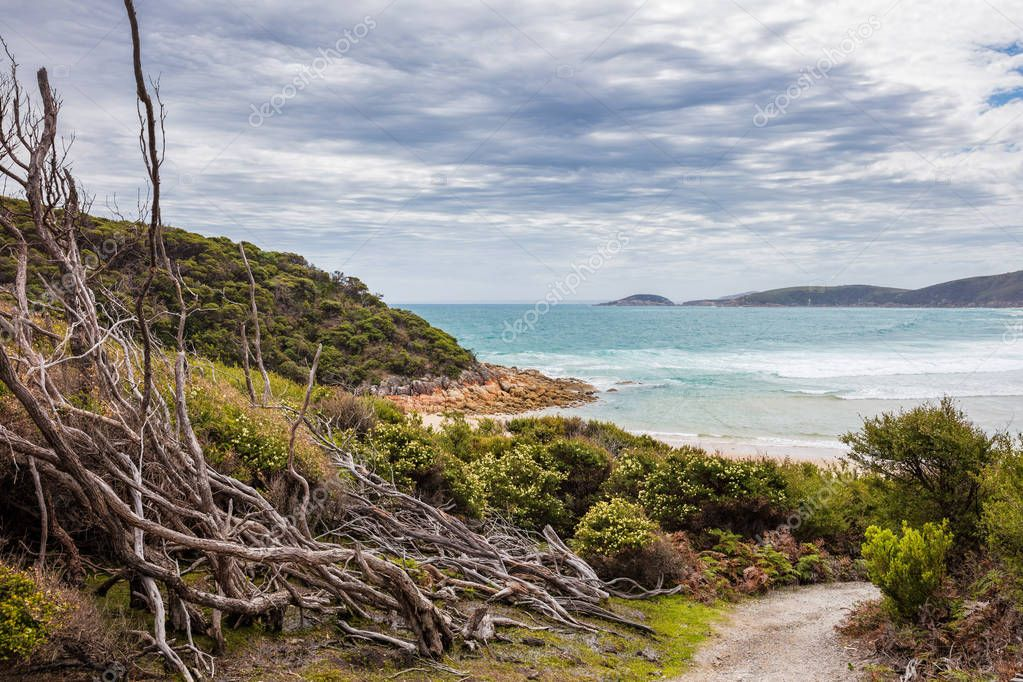 Remnants of bushfire damaged trees at Leonard bay in Wilsons Promontory national park in Victoria, Australia