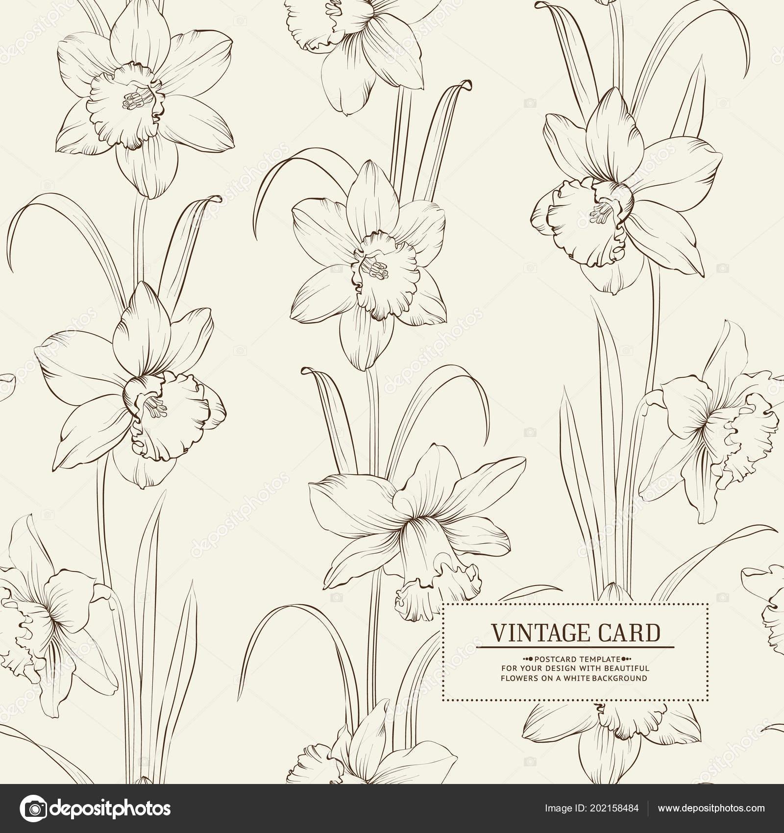 botanical illustration of daffodil stock vector kotkoa 202158484