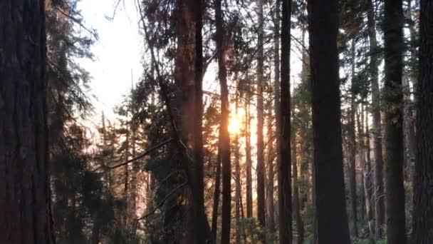 lesní stromy. lehké koryto lesa. strom lesy. silueta stromy. sluneční erupce západ slunce. přírodní pozadí
