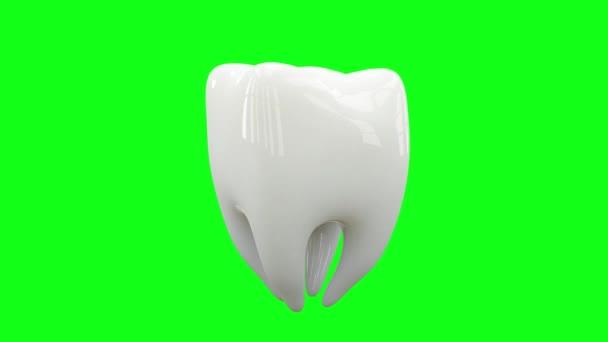 Health Tooth loop rotate on green screen