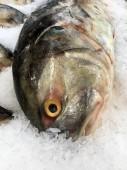 Friss hal, jég. Hal szakaszán a szupermarket