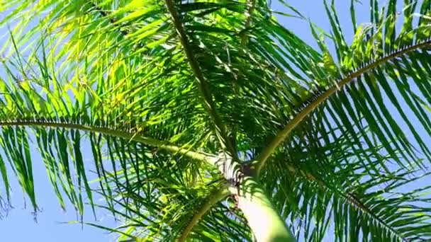 Spinning under palm trees. Looking up to green palm leaves. Travel and summer concept. 360 rotation. slow motion