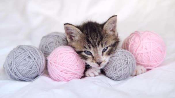 4k Gestreiftes Kätzchen schläft ein und schließt die Augen. Nette Katze mit rosa und grauen Bällen Fäden auf weißem Bett