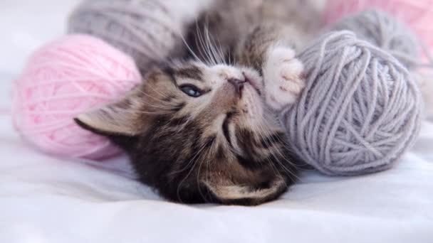 4k Proužkované kotě usne a zavře oči. Roztomilá kočka s růžovými a šedými kuličkami přadénky nitě na bílém lůžku