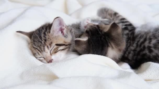 4k two striped domestic kittens lying on white light blanket on bed. Sleep and play cat. Concept of adorable pets.