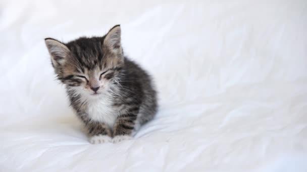 4k vicces nedves csíkos belföldi cica elalszik, feküdt fehér fény takaró az ágyon. Alvó macska. Az imádnivaló háziállatok fogalma.