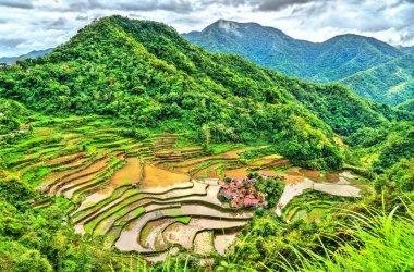 Bangaan Rice Terraces - Luzon, Philippines