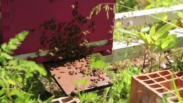 Die Bienen kommen aus dem Stock und schwärmen. Bienenschwarm kriecht am Bienenstock-Eingang entlang.