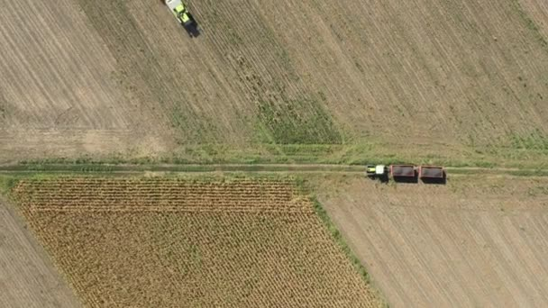 Aerial top view of agricultural harvester is cutting and harvesting mature sunflower on farm fields.