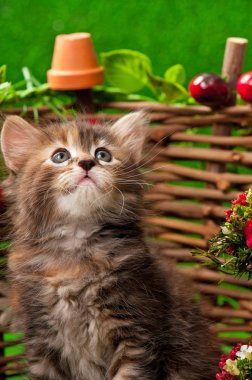 Cute kitten on the decorative wattle fence over bright green background