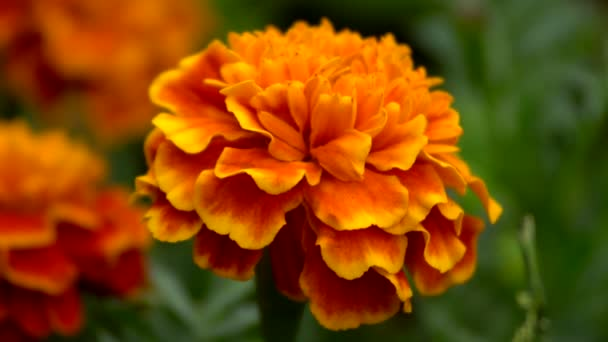 decorative orange flower on the flowerbed