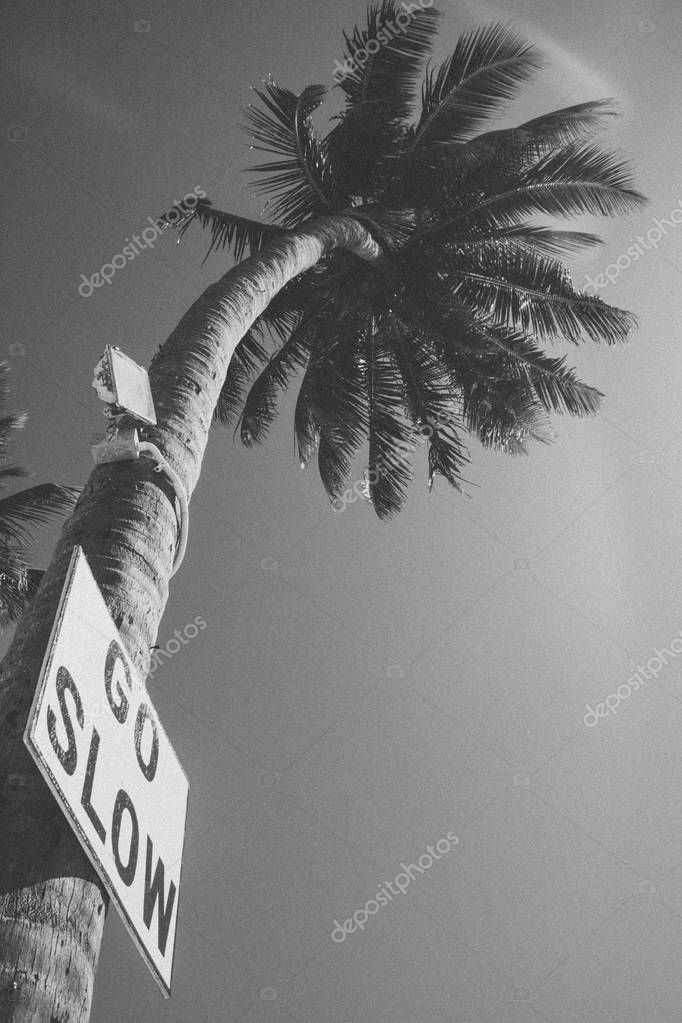 Go Slow Sign on Palm Tree in Caye Caulker Belize