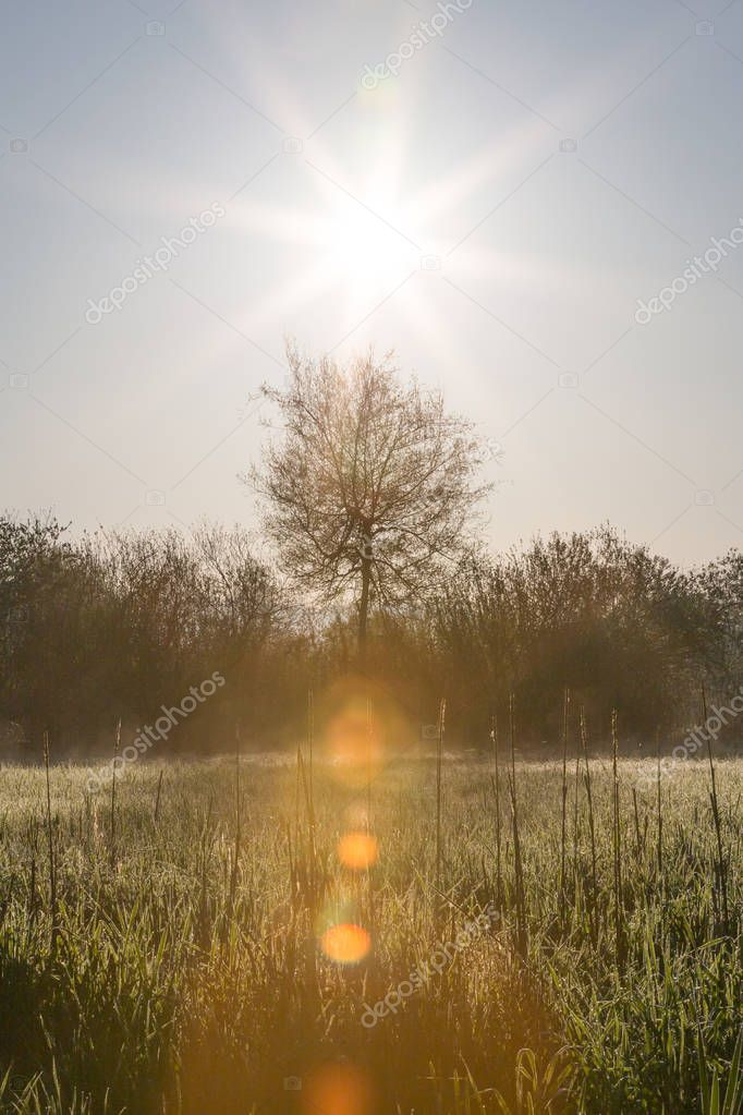 Sun Raising Over High Grasses with Morning Dew and Trees in Spring