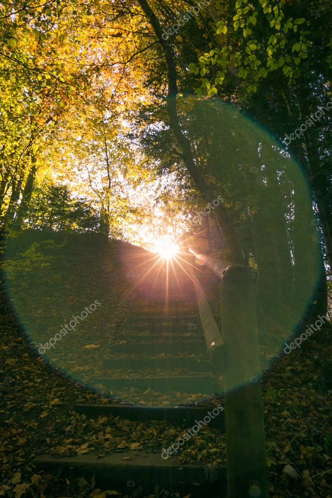 Sun Shining and Setting in Green Forest with Natural Sun Flare