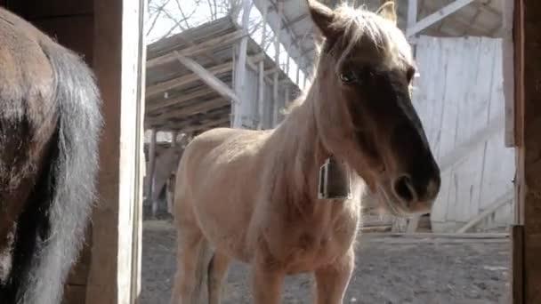 lovak van a gazdaságban
