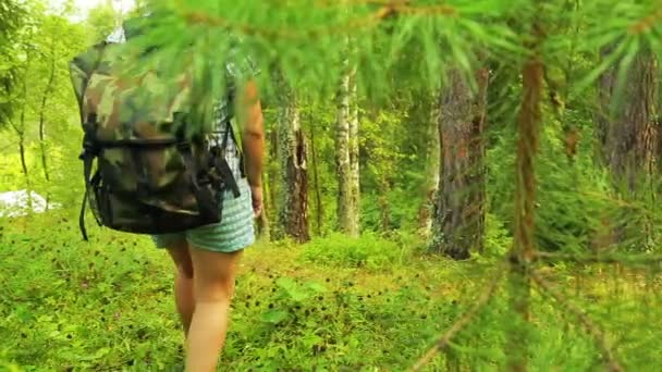 A man with a backpack rises to a hill in the middle of the forest.