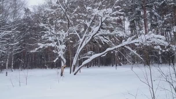 Sníh v zimě parku na zamračený den