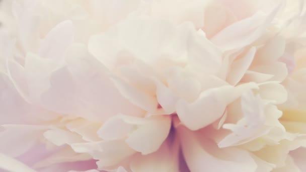 Óvatosan rózsaszín bazsarózsa. Természetes virágháttér