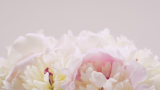 Strauß weiß-rosa Pfingstrosen auf weißem Hintergrund. natürlichen floralen Hintergrund. Valentinstag-Konzept, Hochzeitshintergrund